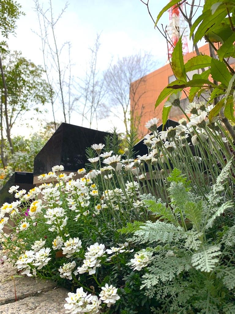 芝庭苑 植栽メンテナンス